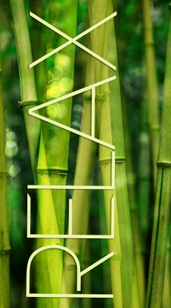 coque green bamboo