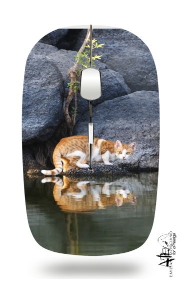 Cat Reflection in Pond Water