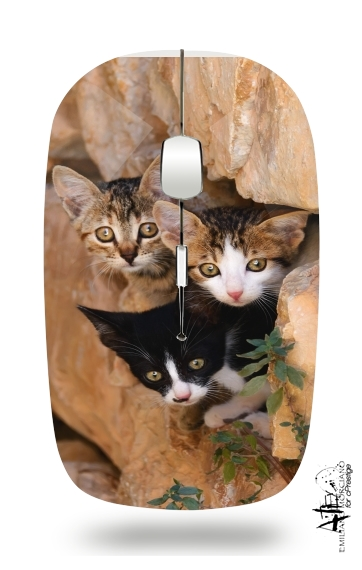 Three cute kittens in a wall hole