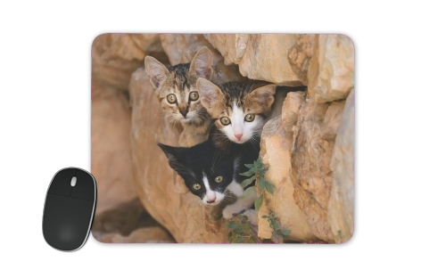 tapis de souris Three cute kittens in a wall hole