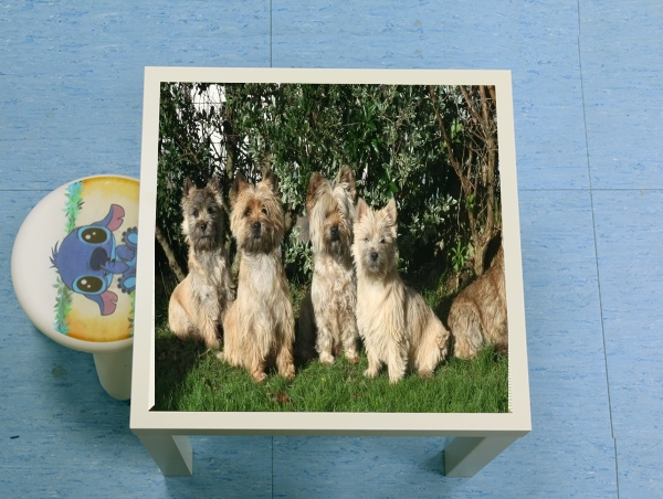 table d'appoint Cairn terrier