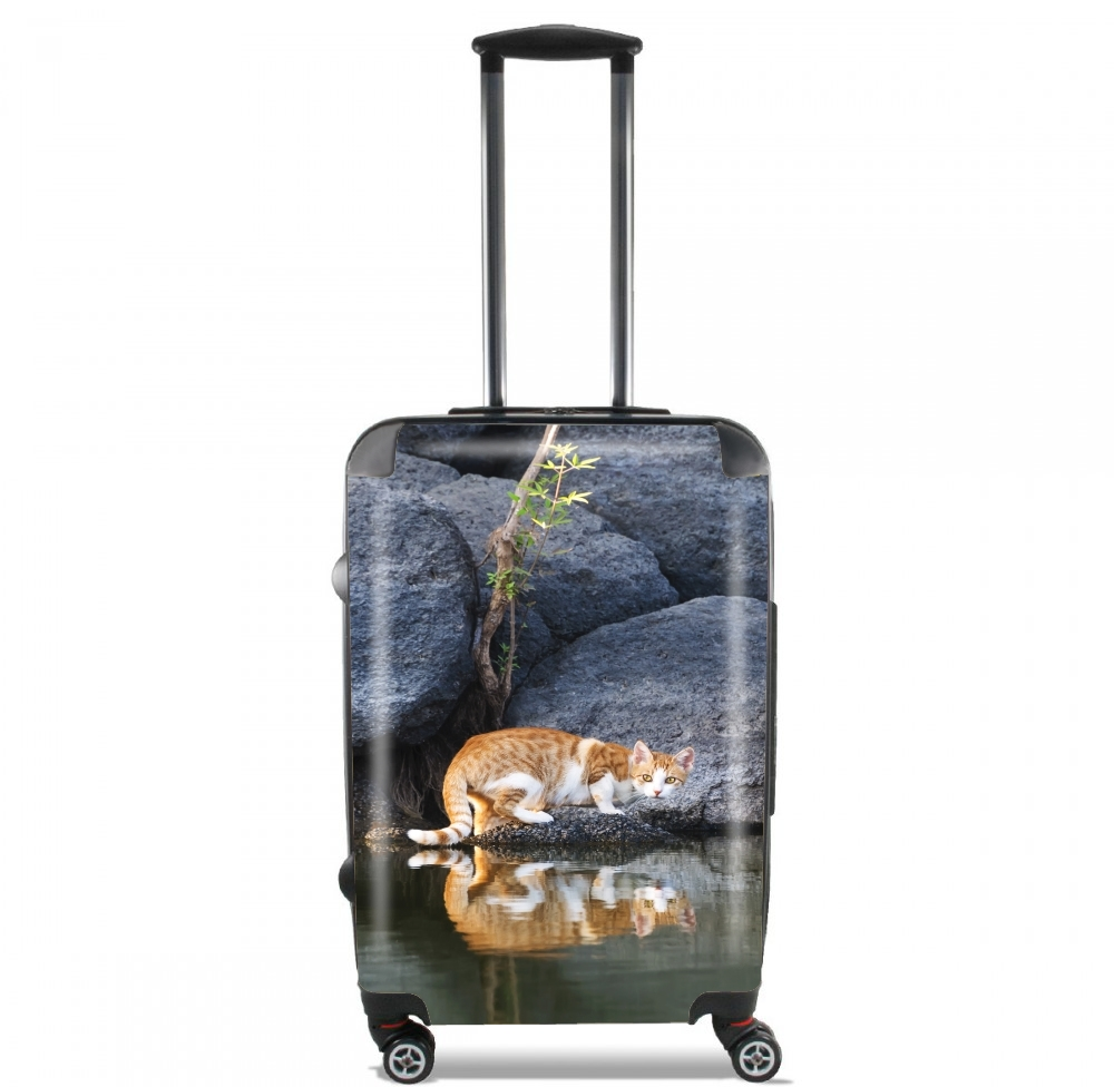 valise Cat Reflection in Pond Water